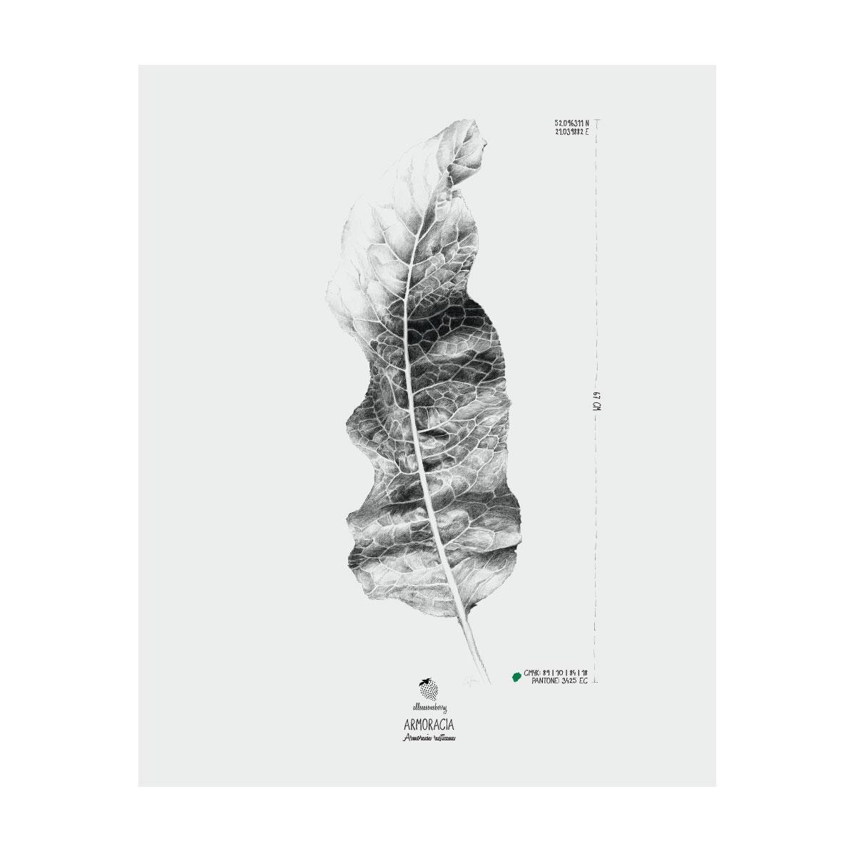 AllSeasonsBerry Plakat Liść chrzanu