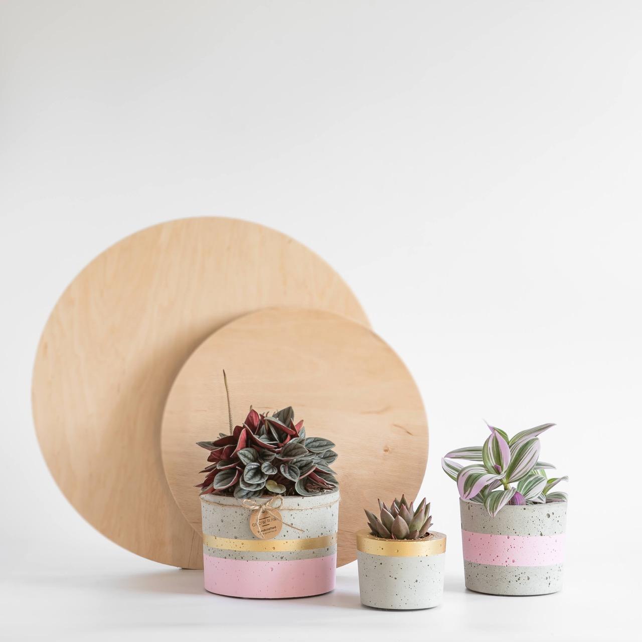 GrowRaw zestaw