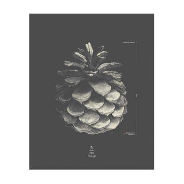 AllSeasonsBerry Plakat Szyszka sosny