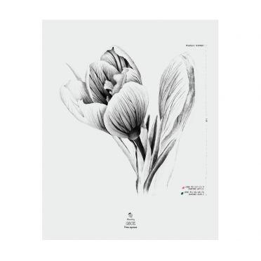 AllSeasonsBerry Plakat Łubin